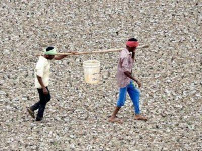 भारत र पाकिस्तानमा उच्च जलसंकट, नेपाल पनि जोखिममा