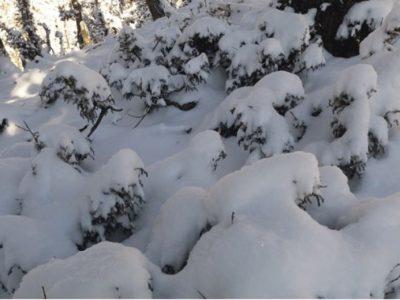 हिमपात र वर्षाले चिसो बढेपछि जनजीवन कष्टकर